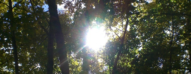 Sun Through foliage